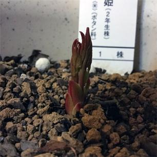 shakuyakuApr4-2.jpg